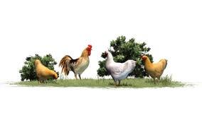 Kurczaki i kogut w trawie i krzakach Obraz Stock