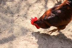 Kurczaki jedzą patio obraz stock