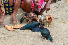 Kurczaki na ulicie obok sprzedawców gotowych sprzedającym handlowami w Toliara Madagascar fotografia stock
