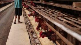 Kurczaki w klatce na kurczaka gospodarstwie rolnym Kurczaków jajek gospodarstwo rolne zbiory