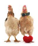 Kurczaki z zabawkarskim sercem zdjęcie royalty free