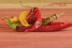 Kurczyć się i lejni chili pieprze na czerwonym drewnianym tle Przegnili chili pieprze Zdjęcia Royalty Free