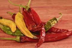 Kurczyć się i lejni chili pieprze na czerwonym drewnianym tle Przegnili chili pieprze Zdjęcie Royalty Free