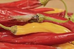 Kurczyć się i lejni chili pieprze na drewnianym tle Przegnili chili pieprze Płaski projekt Obrazy Royalty Free