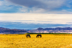 Kurdish Ning scenery in Xinjiang, China Royalty Free Stock Photo