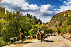 Kurdish Ning scenery in Xinjiang, China Stock Photography