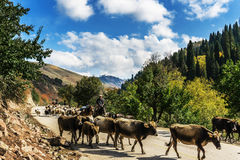 Kurdish Ning scenery in Xinjiang, China Royalty Free Stock Photo