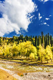 Kurdish Ning scenery in Xinjiang, China Stock Image