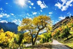 Kurdish Ning scenery in Xinjiang, China Royalty Free Stock Photos