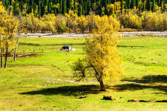 Kurdish Ning scenery in Xinjiang, China Royalty Free Stock Images