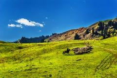 Kurdish Ning scenery in Xinjiang, China Stock Images