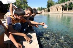 Kurdish pojkar matar den sakrala fisken på Balikli Gol (pöl av den sakrala fisken) i Urfa (Sanliurfa) Royaltyfri Fotografi
