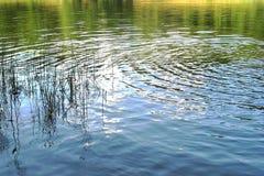 Kurenda macha na wodnym stole jezioro zdjęcia stock