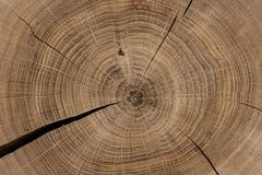 Kurenda piłujący drewno wyszczególniający obraz royalty free