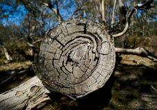 Kurenda wzór pierścionki po środku drzewnej beli fotografia royalty free
