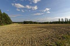 Kurenda wzór rozwijać na piaskowatej powierzchni zdjęcie royalty free