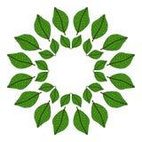 Kurendy rama zieleni liście również zwrócić corel ilustracji wektora TARGET688_1_ ręką ilustracja wektor