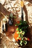 Kuriositeter i tunnlandet, Akko, kängor och skor, handväskor, som blomkrukor, yttre design och garnering, i Israel arkivfoto