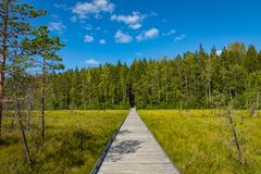 Free Kurjenrahka National Park. Nature Trail. Green Forest At Summer Time. Turku, Finland. Nordic Natural Landscape. Scandinavian Stock Photography - 155510662