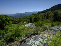 Kurkt bomen van Andalucia, Spanje royalty-vrije stock foto