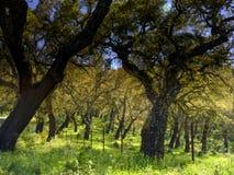 Kurkt bomen van Andalucia, Spanje royalty-vrije stock afbeeldingen