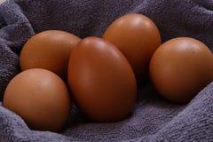 Kurni jajka obrazy stock