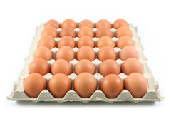 Kurni jajka w papierowym panelu na białym tle Obraz Stock