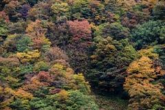 Kurobe峡谷,富山,日本 库存图片