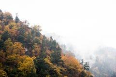 Kurobe峡谷,富山,日本 免版税图库摄影