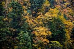 Kurobe峡谷,富山,日本 免版税库存照片