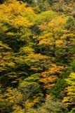 Kurobe峡谷,富山,日本 库存照片