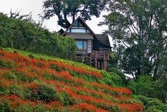 Kurort w dżungli Fotografia Royalty Free