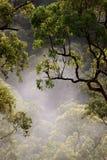 kurrajong有薄雾的早晨 免版税库存图片