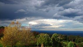 Kurrajong wzrosty, Błękitne góry Zdjęcia Royalty Free