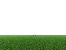 kursowy golf Fotografia Stock