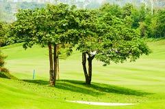 kursowy golfowy drzewo Obrazy Stock