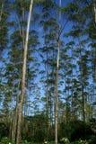 kurtyna naturalnej Zdjęcie Royalty Free