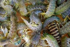 Kuruma prawns for sale, Sai Kung, Hongkong Royalty Free Stock Photo