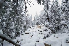 Kurumniki under snow in winter forest Stock Photography