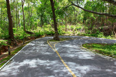 Kurva för asfaltväg med träd Royaltyfri Foto