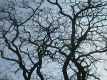 Kurvan förgrena sig av träd i vår på bakgrunden för blå himmel arkivbild
