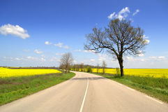 Kurvenreiche Straße in der klaren Frühlingslandschaft Stockbild