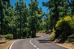 Kurvenreiche Straße im Koniferenwald von La Esperanza, Teneriffa Lizenzfreie Stockbilder
