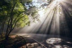 kurvgata med solstrålar i skog Arkivbild