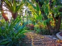 Kurvmodell av brun laterite som kliver gångbanan i en tropisk trädgård, grönskaormbunkeväxt, buske och buske, under skuggning royaltyfri fotografi
