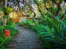 Kurvmodellen av den bruna lateritegångbanan i en tropisk trädgård, grönskaormbunkeväxt, buske och buske, dekorerar med orange kru royaltyfri fotografi