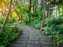 Kurvmodellen av den bruna lateritegångbanan i en tropisk trädgårdträdgård, grönskaormbunkeväxt, buske och buske, dekorerar med ap fotografering för bildbyråer