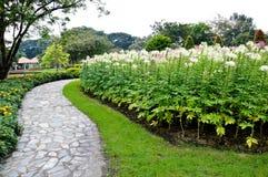 Kurvstenväg i trädgården Royaltyfri Fotografi