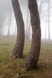 Kurvträd Royaltyfria Bilder