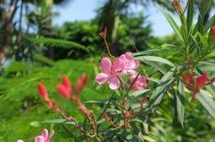 Kurz aufgehalten beie rosa Blume in der Mittagssonne stockfotos